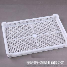小号单冻盘 塑料单冻盘 带网眼塑料单冻盘