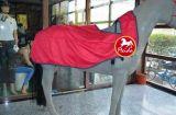 馬衣 新款上市 訓練馬衣