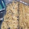 得尔润DR速冻薯条生产设备 速冻土豆条油炸生产线