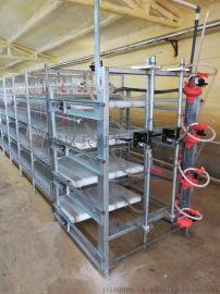 出口非洲  肉鸡笼,电镀锌3层两位层叠式鸡笼子