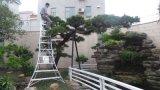 安稳耐 10阶 3米 加宽加厚 厂家直销 三脚梯 园林修枝梯 绿化梯 农艺梯 铝合金梯 工程梯 人字梯