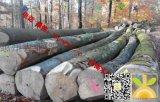尚高木业供应德国榉木原木,直径大树干直中径圆
