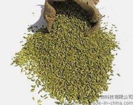 植物提取物-孜然提取物Cuminum cyminum extract