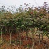 武漢室內外花卉植物養維護苗木補種送貨,花園綠化園林設計