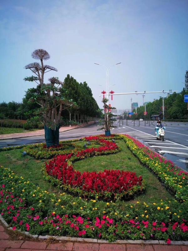 五色草景观绿化优质厂家