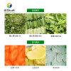 韭菜切段机 商用韭菜切菜机