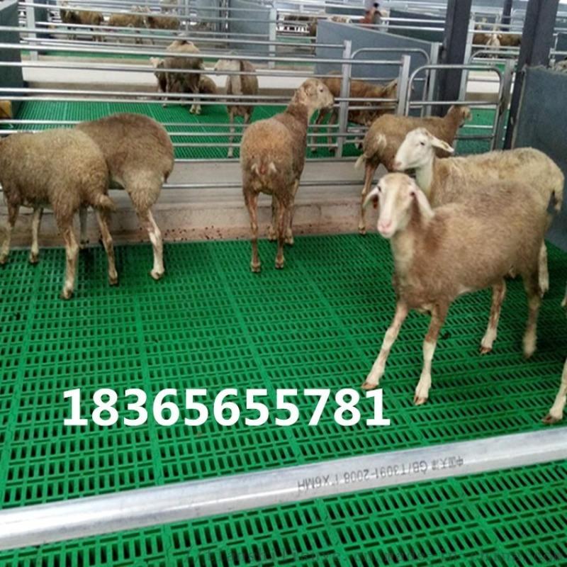 山羊漏糞板廠家 山羊塑料漏糞板 供應羊用漏糞板