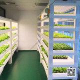 LED人工光型水培植物工廠種植模組六層種植架