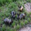 玻璃鋼小兔子雕塑 公園草地動物雕塑擺件