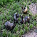 玻璃钢小兔子雕塑 公园草地动物雕塑摆件