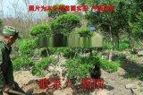 苏州树木树苗市场 花木种植批发市场 庭院苗圃基地