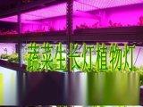LED植物燈深圳廠家報價供應商