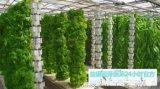 哪里能够培训培育芽苗菜技术-益康园