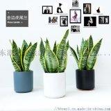 武汉公司绿化销售室内绿植出租
