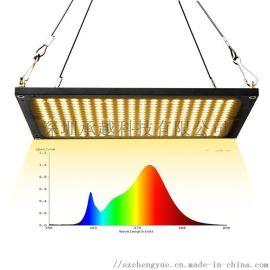 承越补光灯厂家150W量子板led植物生长灯