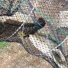 自動地折疊彈簧籠捕魚籠黑魚網籠漁籠