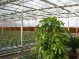 滨州滨城区阳光板厂家,滨州阳光板温室大棚每亩地造价
