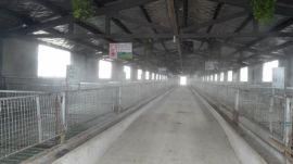 养羊场降温设备生产厂家-郑州米孚科技