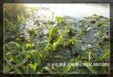 河源那裏有水生植物基地