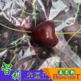 进口水果 新鲜智利车厘子10斤装水果连锁店供应