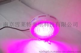 虫草LED灯带及控制箱