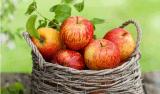 水果粉产地直供 烟台苹果产地直供苹果粉各种水果粉