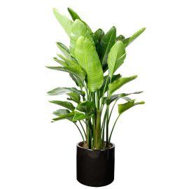 天堂鸟绿植鹤望兰盆栽客厅大型开花植物极乐鸟北欧风花卉批发优惠