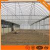 鋼結構簡易溫室 薄膜連棟溫室大棚