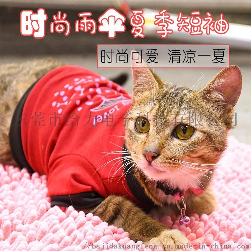 外貿新款寵物狗衣服春夏抖音同款潮牌時尚可愛