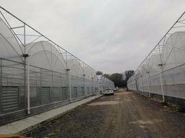 蔬菜花卉智能连栋双拱双膜温室 青州泉瑞温室建造