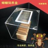 蟑螂饲养缸 昆虫生物蜚蠊养虫笼筛选器