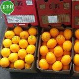 广州江南市场进口水果南非CORE脐橙 鲜榨果汁
