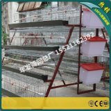 蛋鸡鸡笼子 笼养饲喂养鸡设备价格 热镀锌养殖下蛋鸡的笼子价格