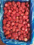 山东工厂直销鲜果速冻冷冻美十三草莓吨位批量出售