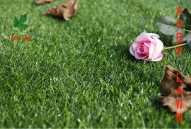 青叶景观休闲人造草坪假草
