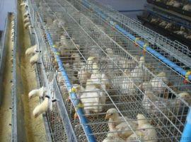 养月子鸡养小鸡的高质量热镀锌笼子
