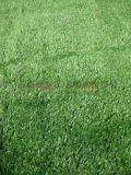 西安人造草坪假草坪13659259282