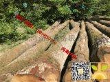 黄岛港口直供比利时白橡原木测量原木中间含皮