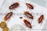 濮阳专业灭蟑螂公司灭鼠杀虫服务