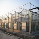 陽光板溫室-智慧連棟溫室【金坤】專業承建溫室工程