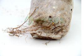 园林苗圃用无纺布美植袋厂价直销 植树袋 育苗袋批发