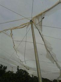 大棚防虫网防虫网、蔬菜大棚防虫网、蝗虫养殖网、乙烯防虫网