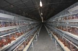 鹤壁蛋鸡笼 蛋鸡笼厂家电话   肉鸡笼 银星鸡笼