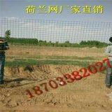 养殖围栏 铁丝荷兰网 养殖场荷兰网 养鸡隔离网荷兰网厂家直销