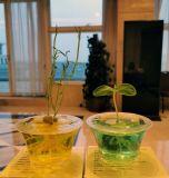 生态科普玩具 创意植物礼品 菜园苗圃