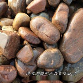 本格供应机制鹅卵石 景观鹅卵石 园路铺装石子河卵石