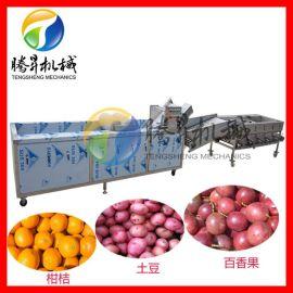 苹果 柠檬 柑橘清洗分选设备 桔普茶 果蔬分级机