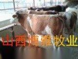 黑龍江養牛場