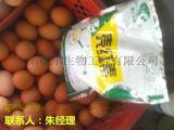 荆州蛋鸡饲料添加剂不二之选 ,改善蛋壳颜色