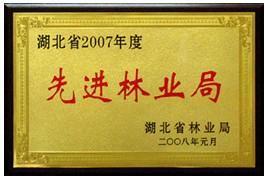 浮雕金箔奖牌纸